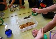 Salamandra Tigrada (Ambystoma tigrinum) en taller extraescolar zoologia
