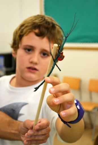 Tallers Extraescolars Ciència Artròpodes Insectes Achrioptera fallax Barcelona