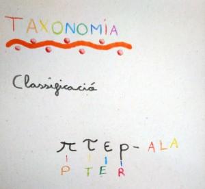 Tallers Extraescolars Ciència Taxonomia Insectes Barcelona