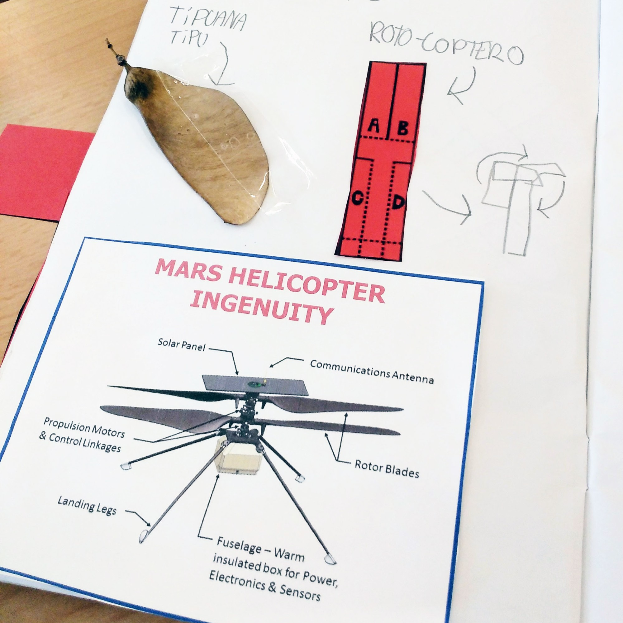 Tallers Ciència Física Llavors Tipuana tipu rotocopter STEM ingenuityhelicopter